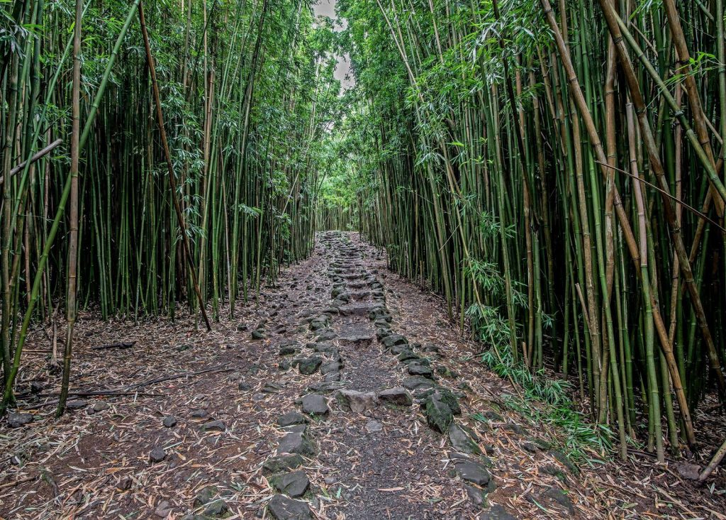 The Pipiwai Trail features waterfalls and a string of pools that are surrounded by lush greenery of the Maui rainforest.
