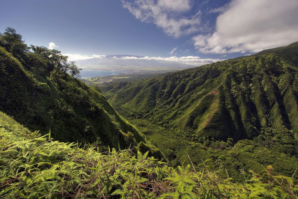 The 2.5­ mile Waihee Ridge Trail is one of the most challenging Maui hikes with 1,500 feet of elevation.