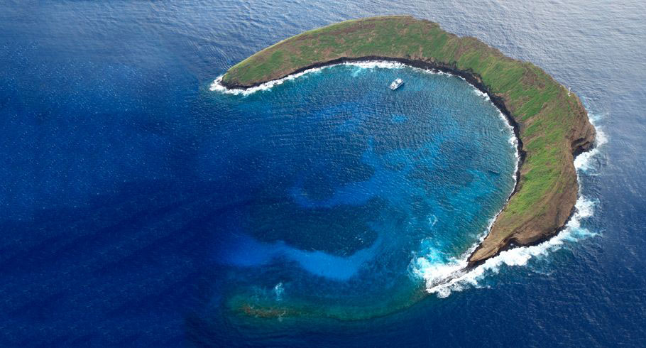 Molokini Crater boasts over 250 species of Hawaiian tropical fish, 100 species of algae, and 35 hard coral species.  Image Source