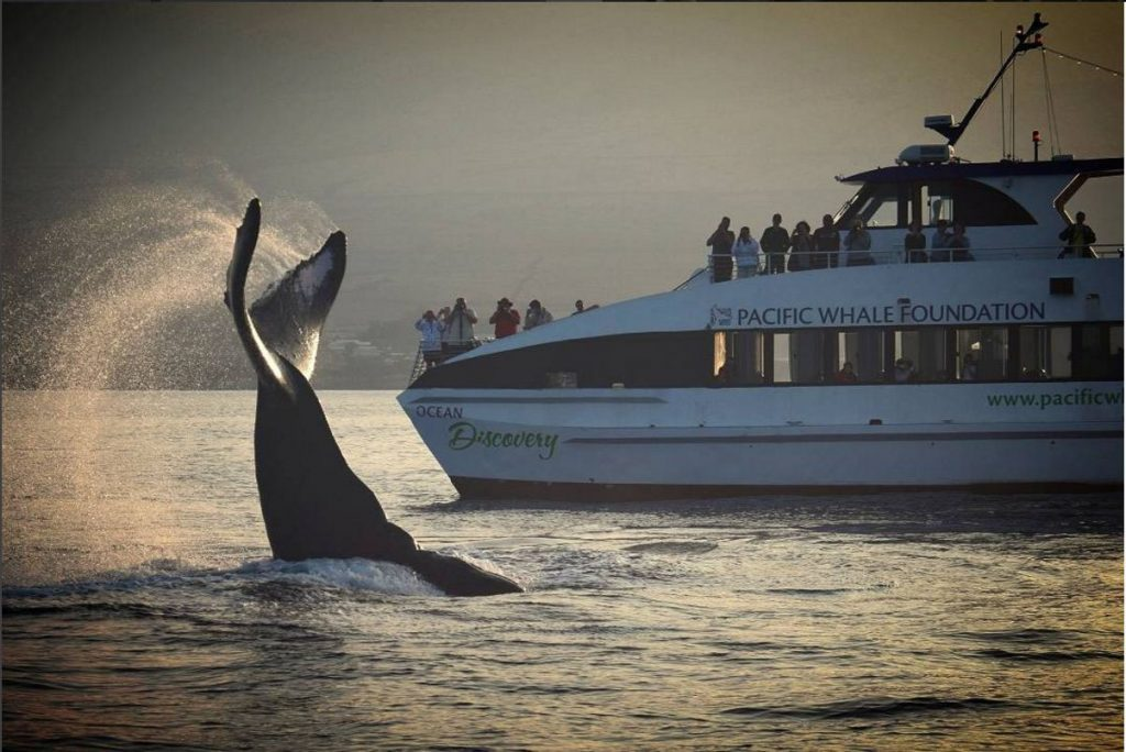 With thirty­-five years of whale research and conservation experience, Pacific Whale Foundation is Maui's #1 whale watching choice.   Image Source