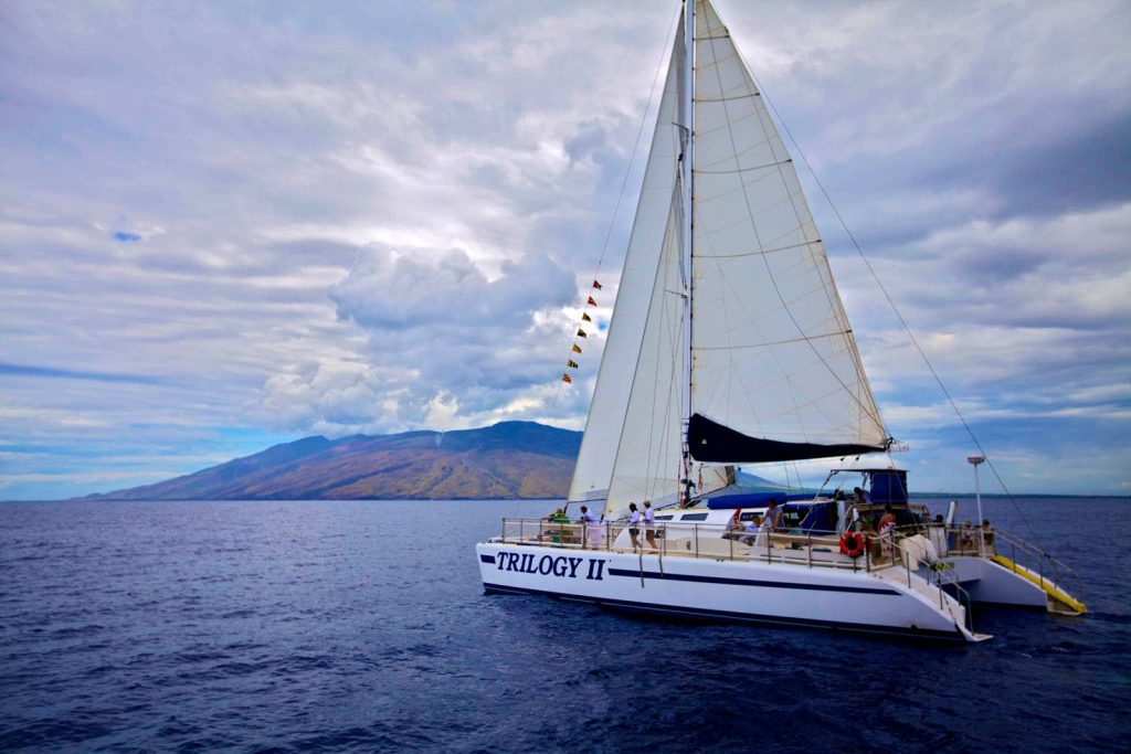 Maui's Trilogy offers whale watching tours from Lahaina, Kaanapali, and Maalaea.  Image Source