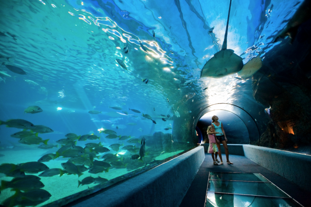 The Maui Ocean Center is nationally named as one of the best aquariums in the US and touts its replica of the natural Hawaiian ocean ecosystem.